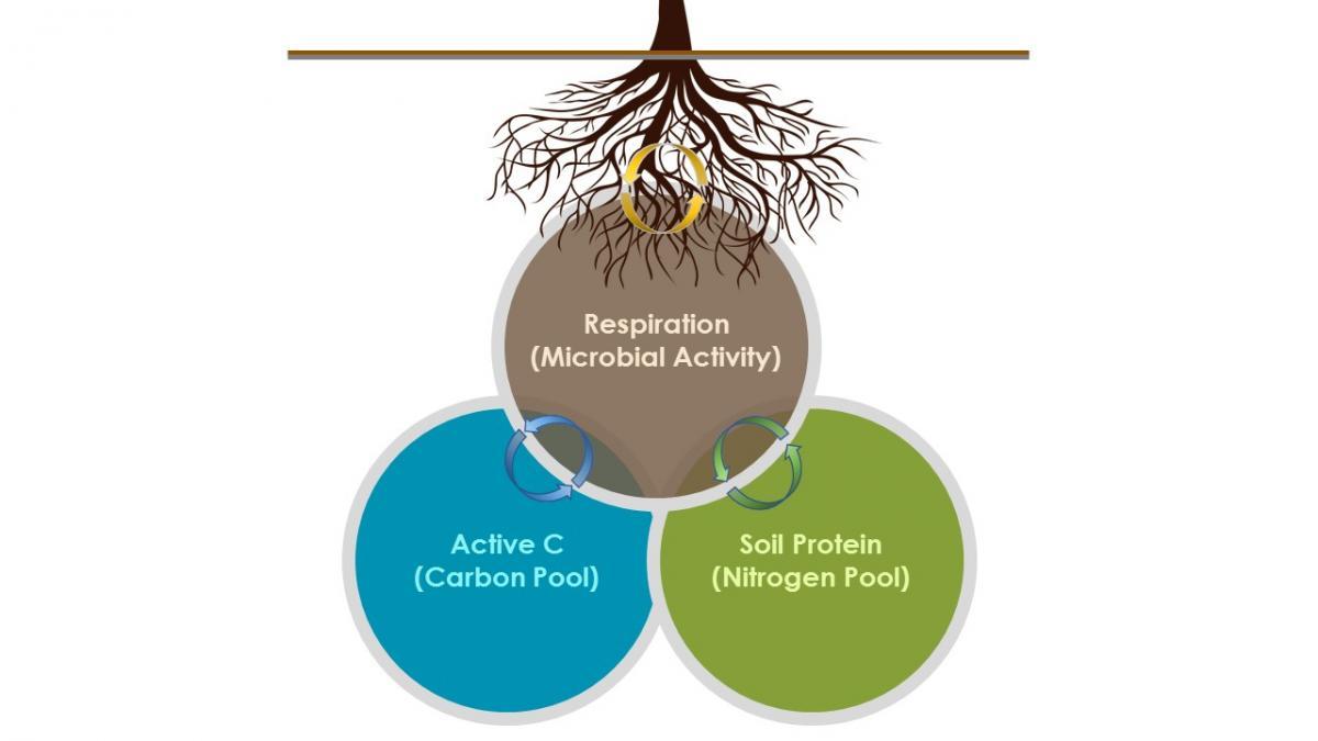 Measurements of active organic matter