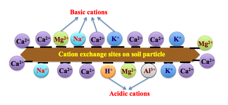 Cation Exchange Sites